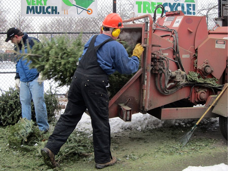 christmas tree recycling | mulchfest 2019