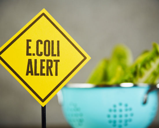 E. coli in romaine
