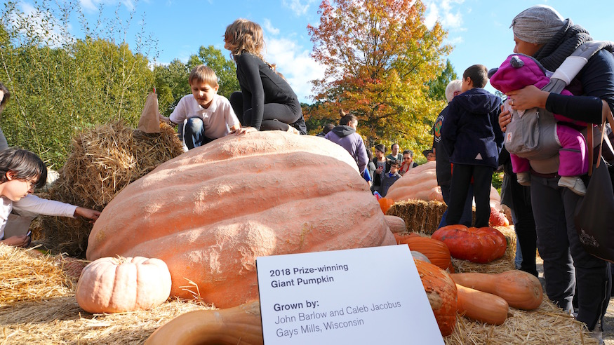giant pumpkins new york botanical garden spooky halloween events