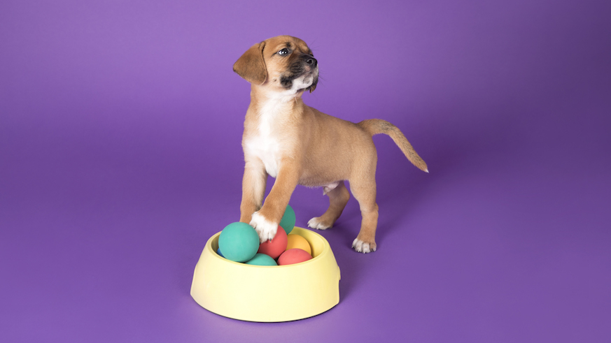 dog art gallery nyc humans best friend