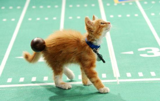 Kitten Bowl Adoption Event