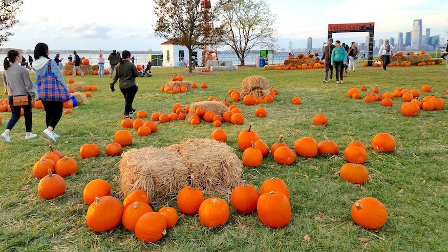 pumpkin patches in NYC governors island pumpkin point