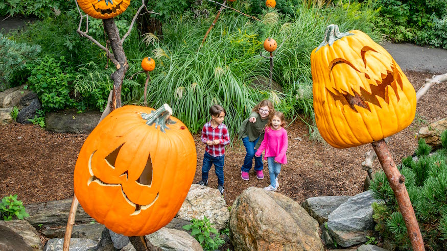 pumpkin patches in nyc new york botanical garden