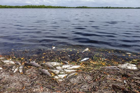 Red tide is killing marine life in Florida