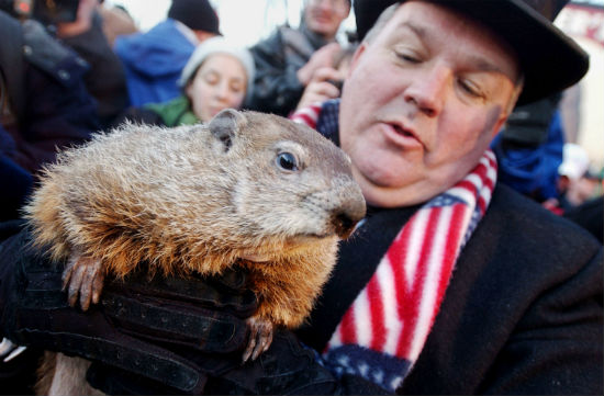 What happens if the groundhog sees his shadow punxsutawney phil